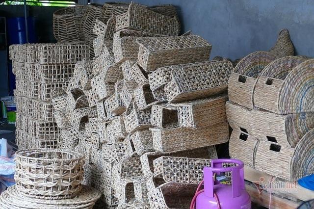 Nông dân 8X ở Ninh Bình thu 20 tỷ đồng/năm từ loại rau cho lợn ăn - 2