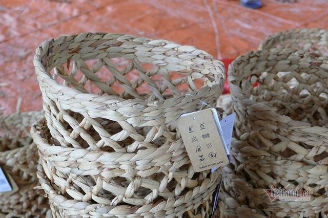 Nông dân 8X ở Ninh Bình thu 20 tỷ đồng/năm từ loại rau cho lợn ăn - 4