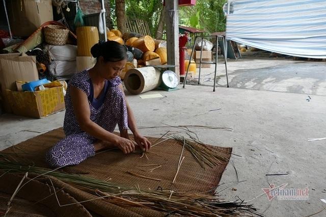 Nông dân 8X ở Ninh Bình thu 20 tỷ đồng/năm từ loại rau cho lợn ăn - 5