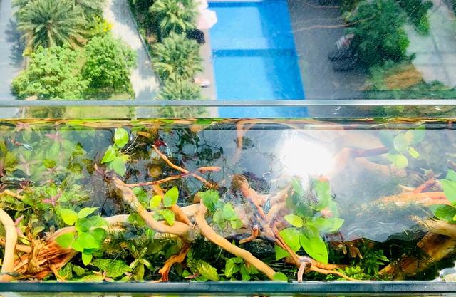 Ông bố ở Sài Gòn biến ban công thành vườn thu nhỏ với hồ cá, cây xanh - 6