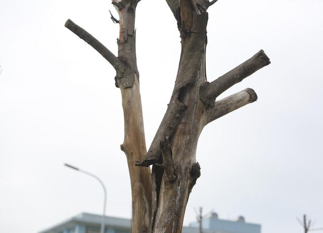 Hà Nội: Hàng trăm cây xanh tiếp tục đột tử trên con đường mới mở - 5