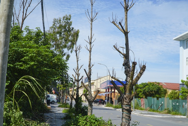 Hà Nội: Hàng trăm cây xanh tiếp tục đột tử trên con đường mới mở - 11