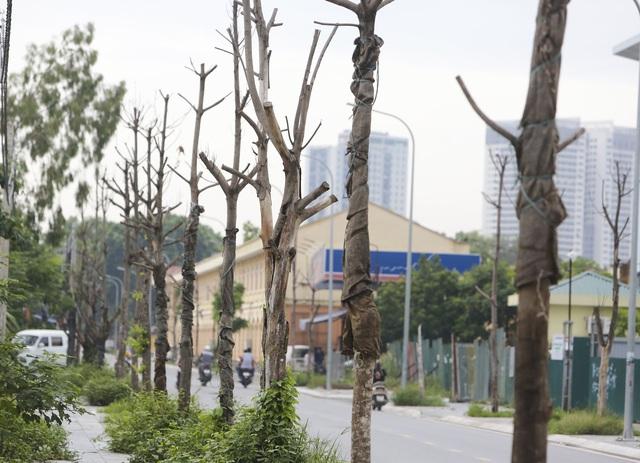 Hà Nội: Hàng trăm cây xanh tiếp tục đột tử trên con đường mới mở - 3