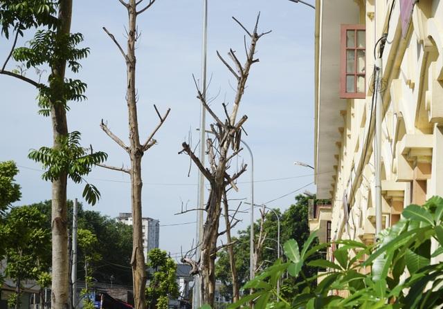 Hà Nội: Hàng trăm cây xanh tiếp tục đột tử trên con đường mới mở - 7