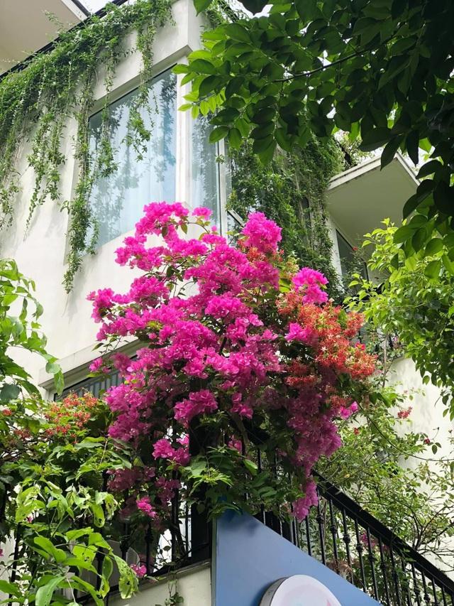 """Mẹ đảm khéo tay """"hô biến"""" ban công thành vườn hoa giấy tuyệt đẹp ở Hà Nội - 5"""