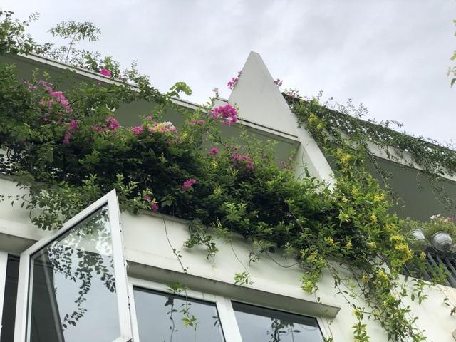 """Mẹ đảm khéo tay """"hô biến"""" ban công thành vườn hoa giấy tuyệt đẹp ở Hà Nội - 6"""