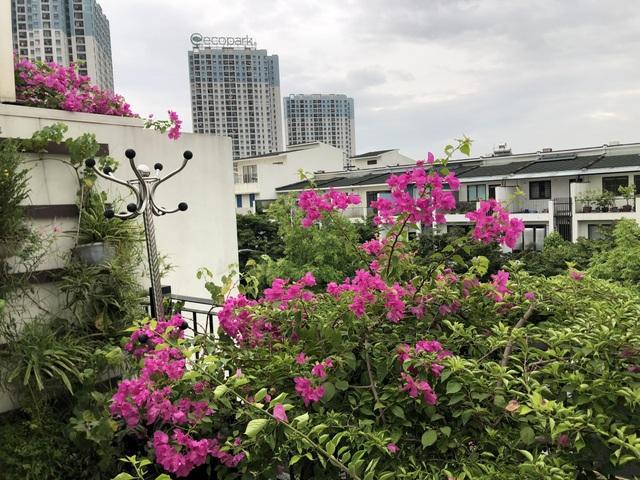 """Mẹ đảm khéo tay """"hô biến"""" ban công thành vườn hoa giấy tuyệt đẹp ở Hà Nội - 7"""