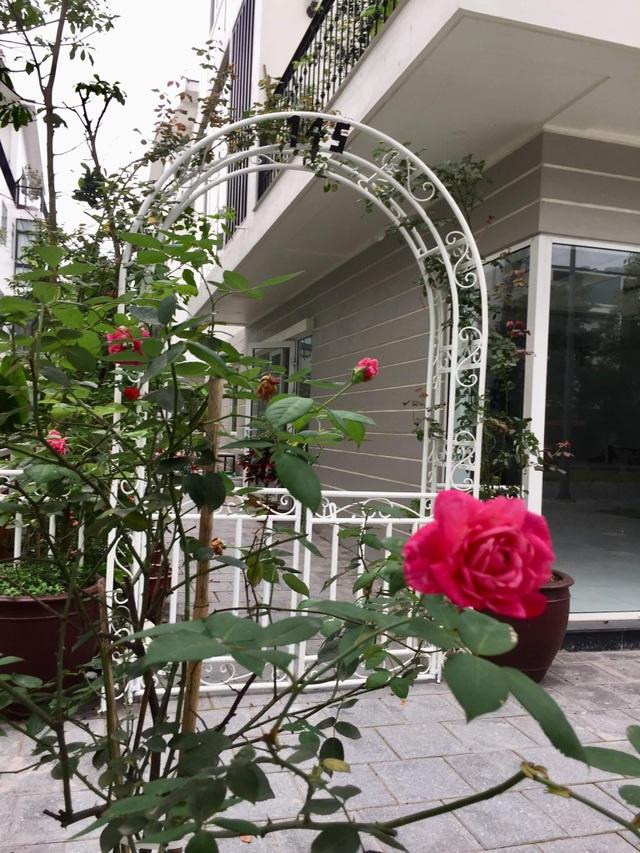 """Mẹ đảm khéo tay """"hô biến"""" ban công thành vườn hoa giấy tuyệt đẹp ở Hà Nội - 13"""