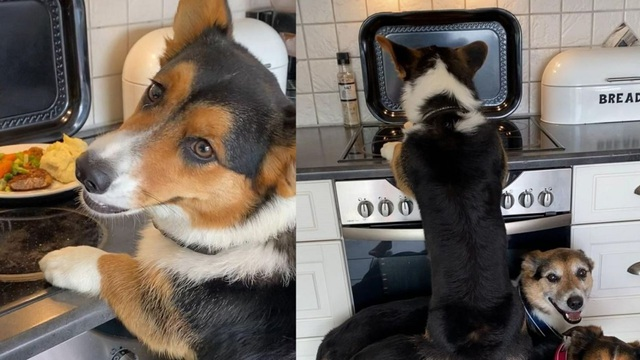 Ba chú chó phối hợp ăn ý để đánh chén đồ ăn - 1