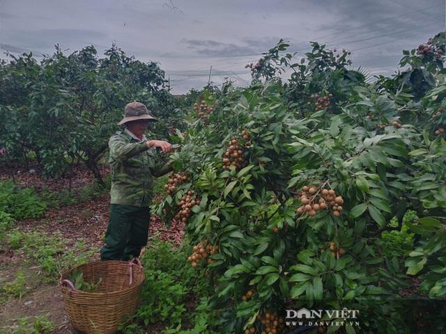 Giá nhãn, giá thanh long chỉ bằng bó rau muống, bán 3 tấn được 10 triệu đồng, nông dân suy sụp - 2