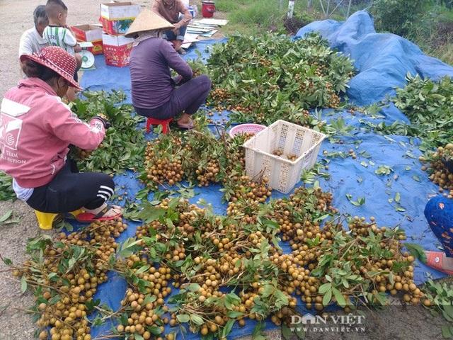 Giá nhãn, giá thanh long chỉ bằng bó rau muống, bán 3 tấn được 10 triệu đồng, nông dân suy sụp - 3