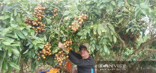 Giá nhãn, giá thanh long chỉ bằng bó rau muống, bán 3 tấn được 10 triệu đồng, nông dân suy sụp - 4