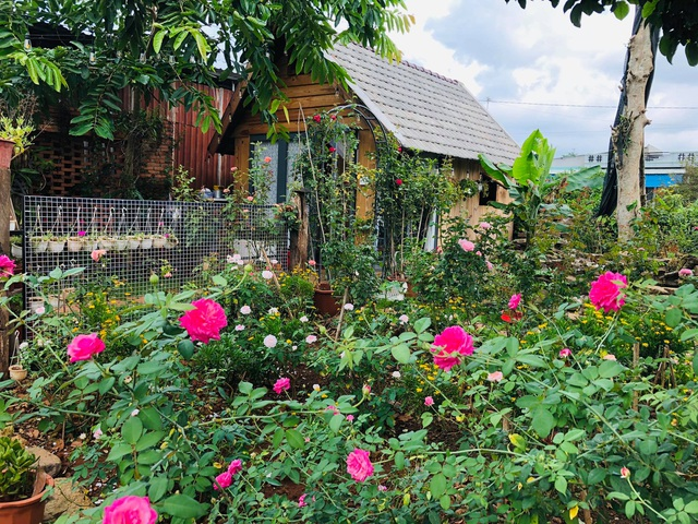 Ông bố ở Vũng Tàu làm nhà gỗ, trồng cả vườn hồng quý tặng con gái - 1