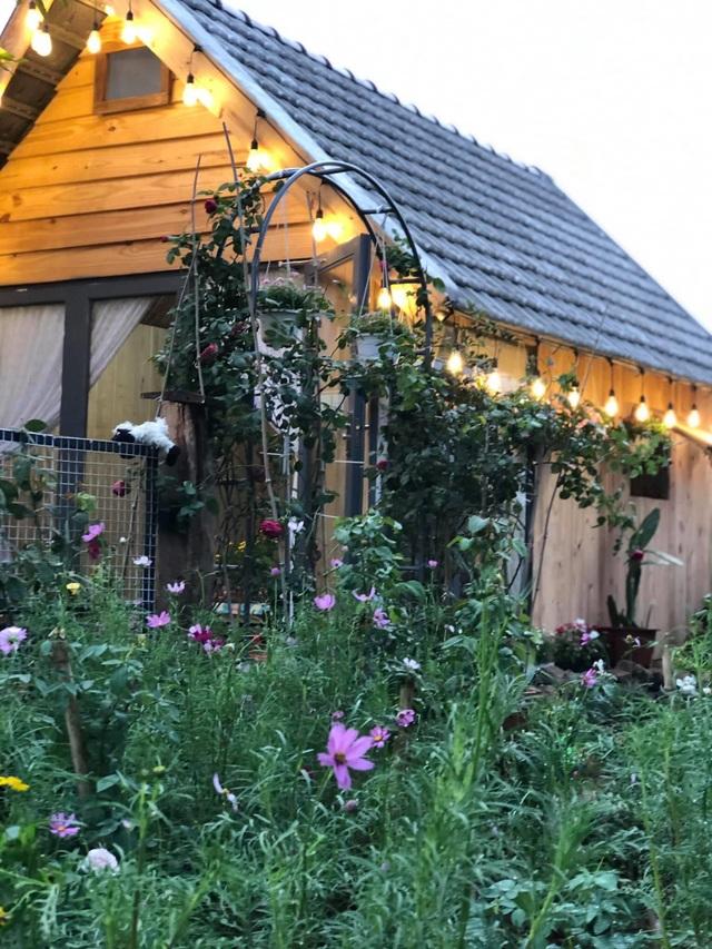 Ông bố ở Vũng Tàu làm nhà gỗ, trồng cả vườn hồng quý tặng con gái - 6