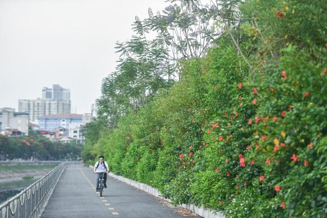 Mãn nhãn những con đường rợp bóng cây xanh ở Hà Nội - 2
