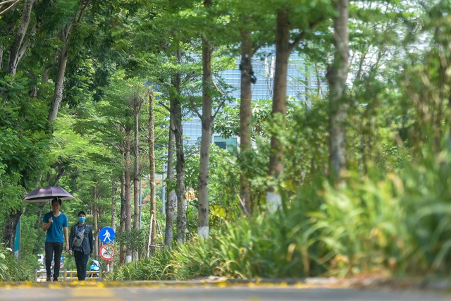 Mãn nhãn những con đường rợp bóng cây xanh ở Hà Nội - 3