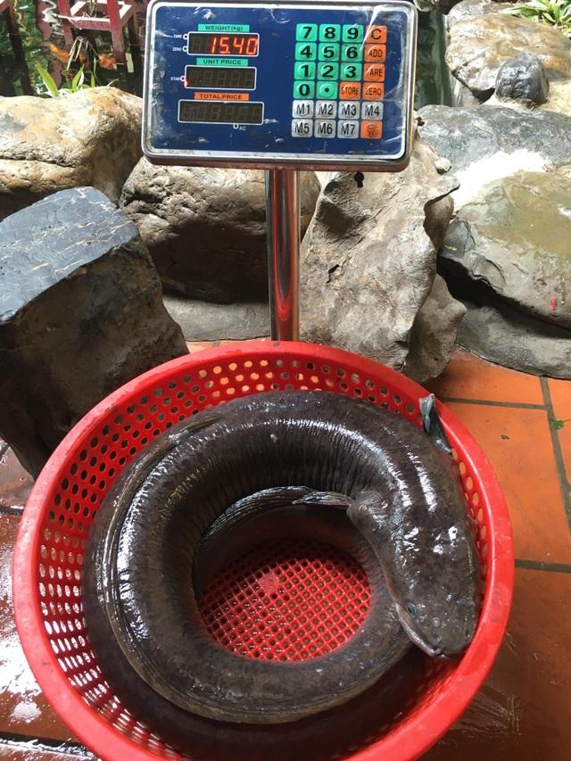 """Chi hàng chục triệu đồng đưa cá lệch """"khủng"""" nặng 15kg từ Nghệ An ra Hà Nội - 3"""