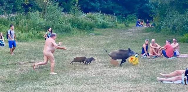 Lợn rừng gây náo loạn bờ biển đông du khách tại Đức - 2