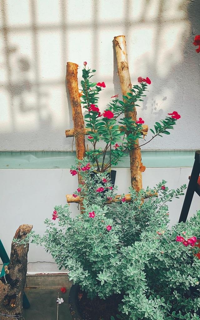 """Người chồng ở Sài Gòn tự làm vườn sân thượng """"sống ảo"""" cho vợ - 7"""
