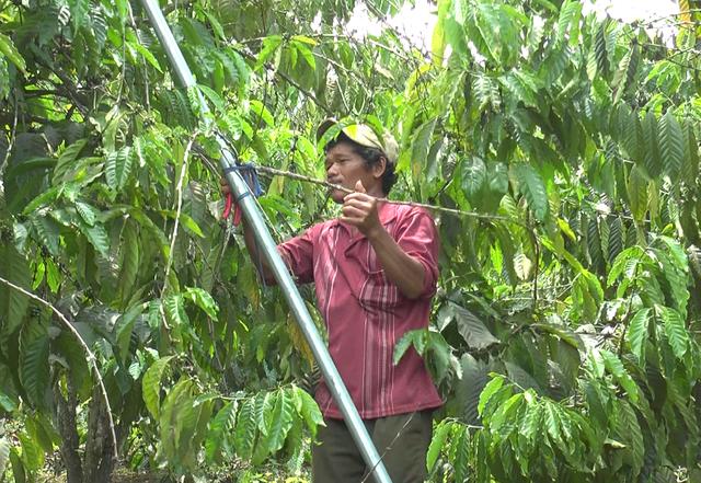 Nghịch lý ổn định dân cư tại Đắk Nông: từ dân định cư trở thành dân di cư - 2