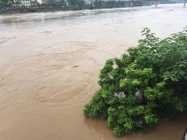 Lũ lớn nhấn chìm đảo Soi Tiền nằm giữa sông Hồng - 3