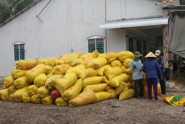 Nông dân trúng quả vì lúa được mùa, giá cao   - 2