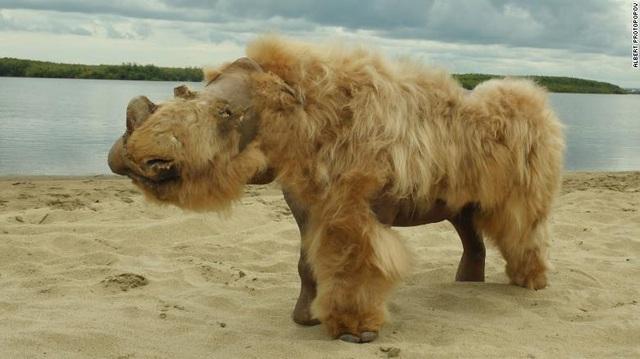 Nga: Sinh vật 14.000 năm vẫn nguyên vẹn như lúc sống, phát hiện bất ngờ trong ruột - 3