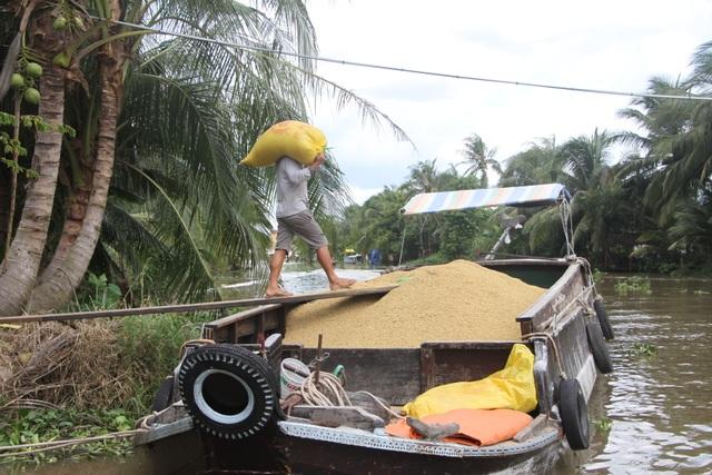 Nông dân trúng quả vì lúa được mùa, giá cao   - 1