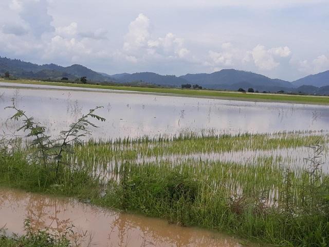 Mưa lớn gây ngập lụt, sạt lở khiến hơn 500 hộ dân bị cô lập - 3