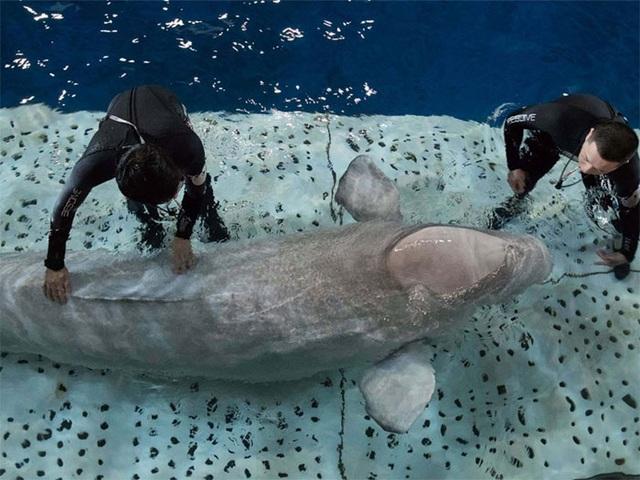 Hai chú cá voi mỉm cười khi được giải cứu khỏi vườn thú - 5