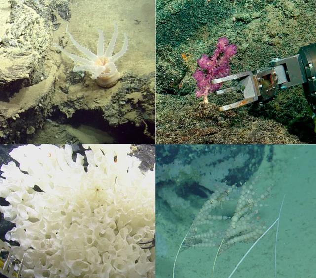 Phát hiện 30 loài mới dưới đáy đại dương ở Ecuador - 1
