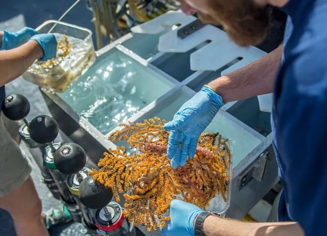 Phát hiện 30 loài mới dưới đáy đại dương ở Ecuador - 2
