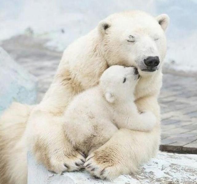 Không gì sánh bằng tình yêu của mẹ - 9