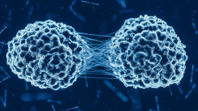 Sản phẩm thừa khi tiêu hóa thức ăn có thể khiến ung thư phát triển - 2