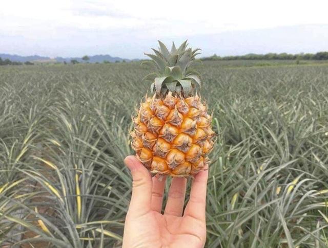 Những loại trái cây hàng đầu ngăn ngừa bệnh ung thư - 2