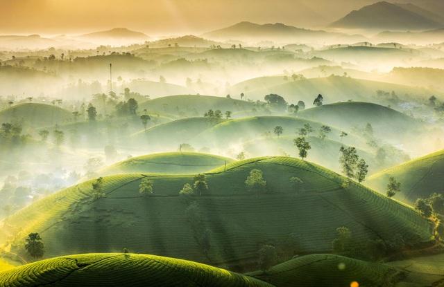 Đồi chè Phú Thọ nằm trong top ảnh thời tiết đẹp của năm - 1