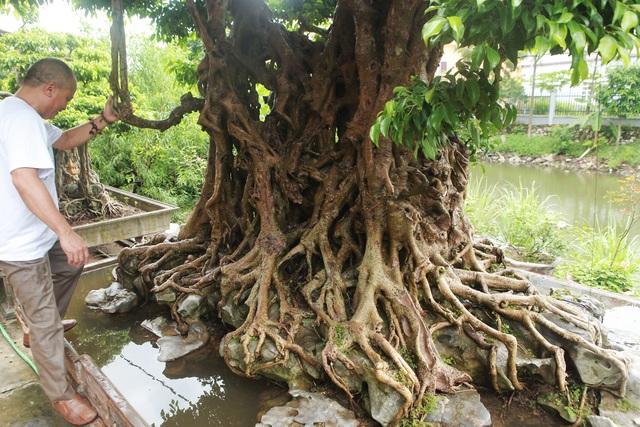"""""""Báu vật ẩn mình"""" có tuổi đời 500 năm ở Hà Nội, trả 100 cây vàng không bán - 4"""