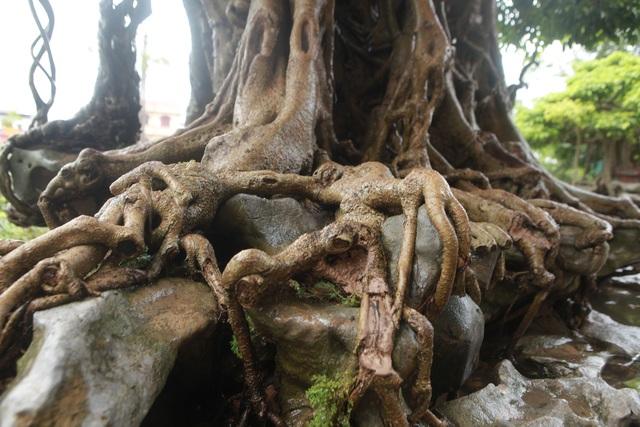 """""""Báu vật ẩn mình"""" có tuổi đời 500 năm ở Hà Nội, trả 100 cây vàng không bán - 5"""