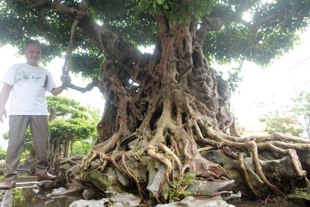 """""""Báu vật ẩn mình"""" có tuổi đời 500 năm ở Hà Nội, trả 100 cây vàng không bán - 6"""