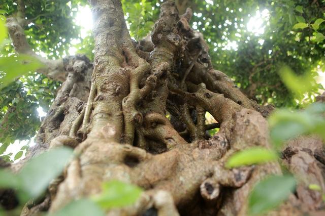 """""""Báu vật ẩn mình"""" có tuổi đời 500 năm ở Hà Nội, trả 100 cây vàng không bán - 7"""