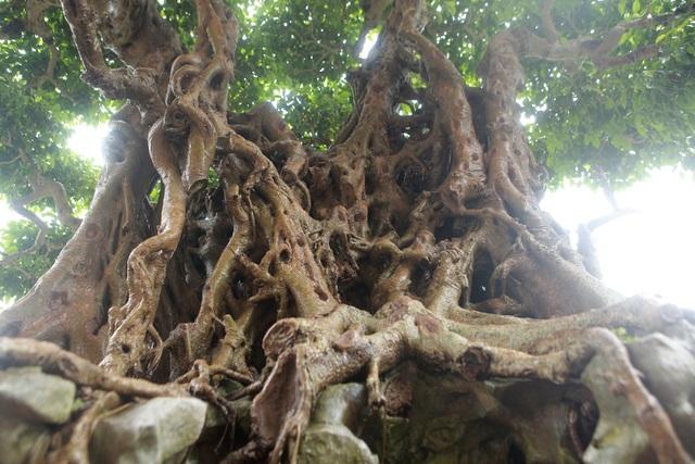 """""""Báu vật ẩn mình"""" có tuổi đời 500 năm ở Hà Nội, trả 100 cây vàng không bán - 9"""