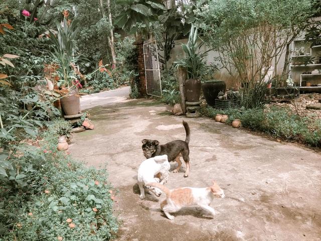 Cuộc sống bình yên trong căn nhà hoa giấy đậm chất thơ ở Huế - 11