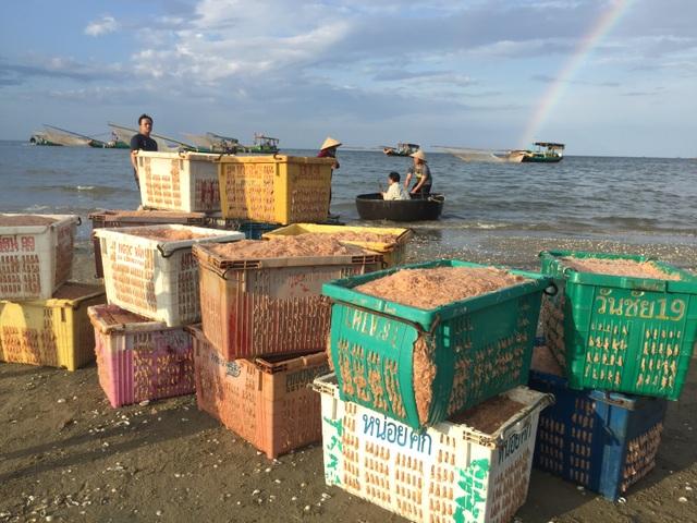 Hà Tĩnh: Ngư dân trúng mùa ruốc biển - 5