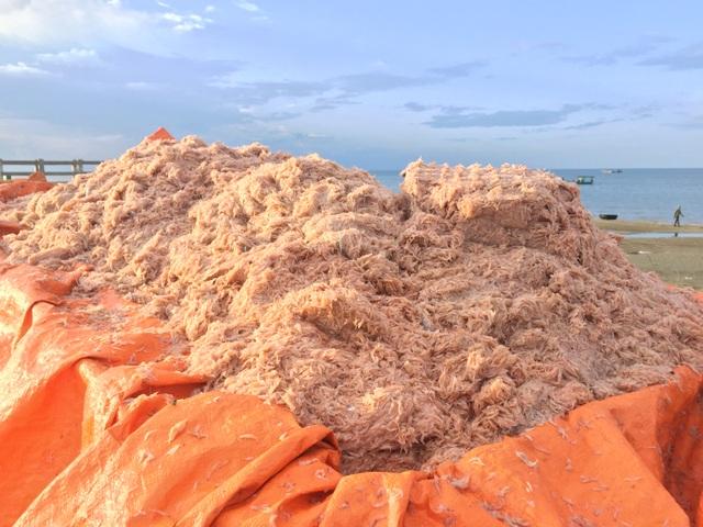Hà Tĩnh: Ngư dân trúng mùa ruốc biển - 10