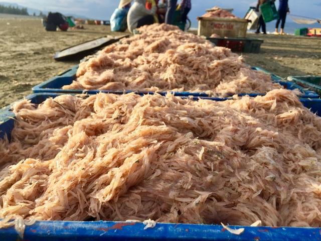 Hà Tĩnh: Ngư dân trúng mùa ruốc biển - 1