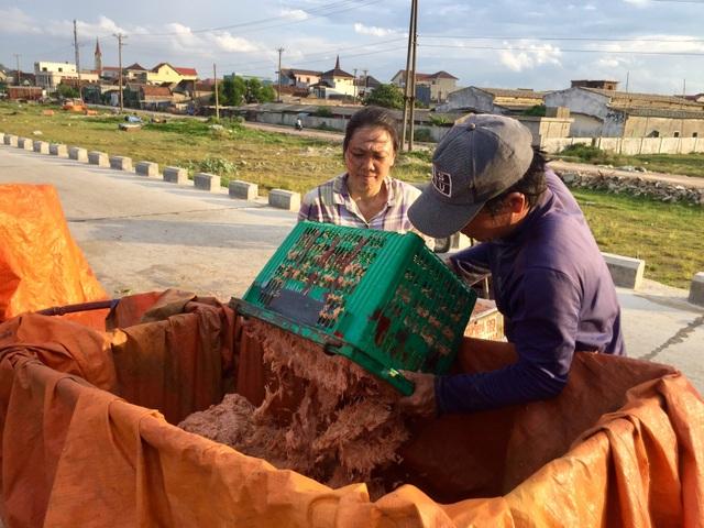 Hà Tĩnh: Ngư dân trúng mùa ruốc biển - 9