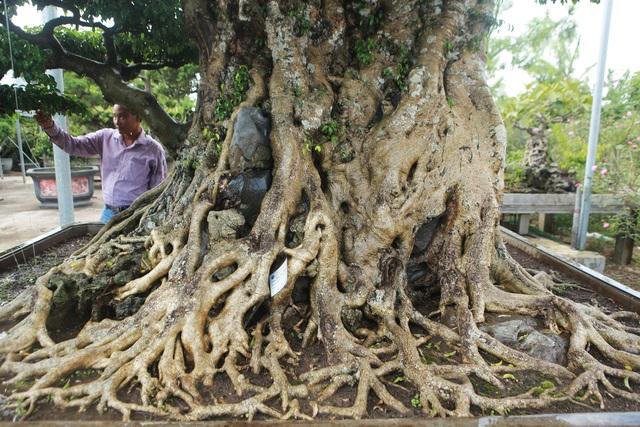 Ngọn cây sanh giá 28 tỷ đồng, vậy gốc cây đáng giá bao nhiêu? - 4