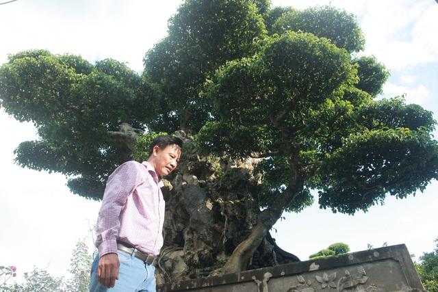 Ngọn cây sanh giá 28 tỷ đồng, vậy gốc cây đáng giá bao nhiêu? - 8