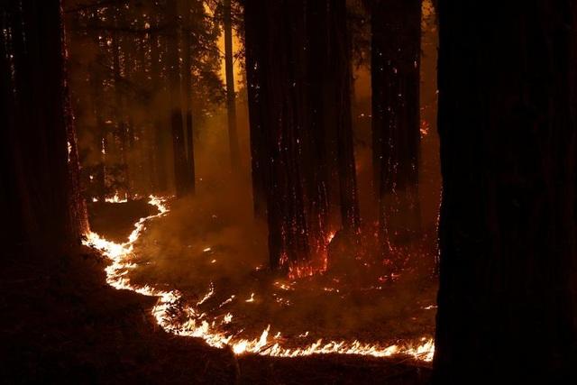 650 đám cháy rừng càn quét bang California, 7 người chết - 14