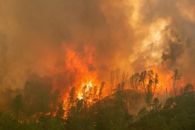 650 đám cháy rừng càn quét bang California, 7 người chết - 2
